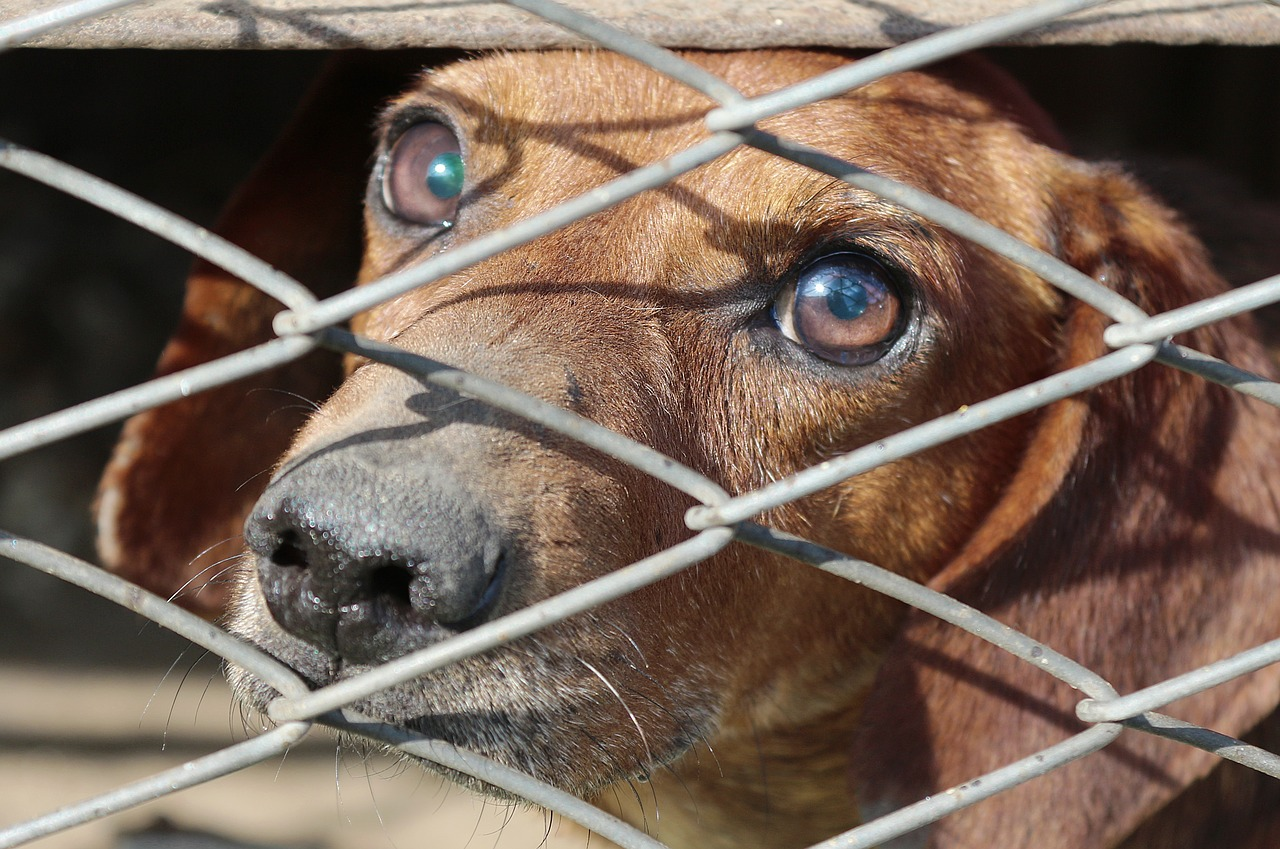 dachshund, cage, dog